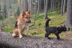 Dovolená v Čechách - dovolená v chatách, chalupách a penzionech, kde je možné ubytování se psem